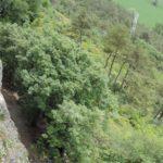 Beginner crag Doberdo in a beautiful natural park, Italy